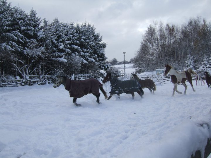 Ponies playing in the snow
